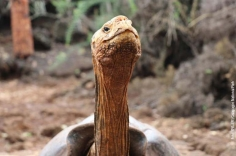 FOTO: Galapagos National Park