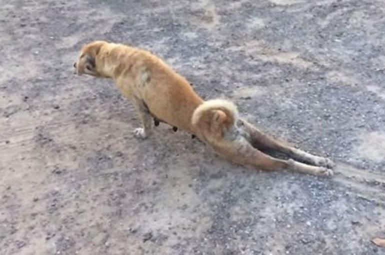 KAKAV FOLIRANT: Prvo ćete se sažaliti na ovog psa, a onda ćete se iznenaditi! (VIDEO)